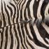 Schitterende Zebra Huid A Kwaliteit