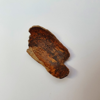 A scraper to remove fat from skin, Inuit, c.a. 2000 - 8000 BP.