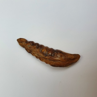 A ritual tooth in the shape / form of an animal (seal?), Inuit, c.a. 2000 - 8000 BP.