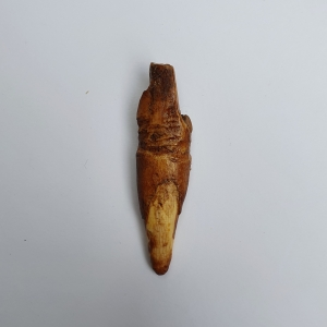 Arrowhead for bird hunting, Inuit, c.a. 2000 - 8000 BP.